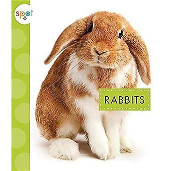 Rabbits (Spot Pets)