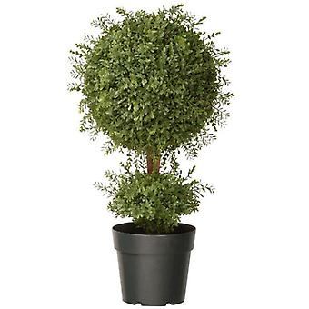 The National Tree 30inch Mini Tea Leaf 1 Ball Plant with growers pot