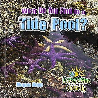 What Do You Find in a Tide Pool? by Megan Kopp - 9780778722632 Book