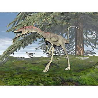 Compsognathus dinosaurus onder fir boom Poster Print