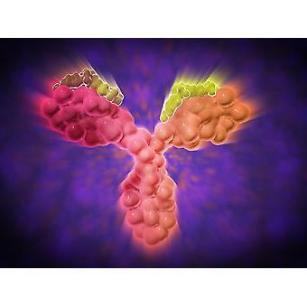 Vista microscopica di un anticorpi umani anticorpo umano sono le proteine a forma di Y usate dal sistema immunitario per difendere contro corpi estranei come batteri e virus Poster Print