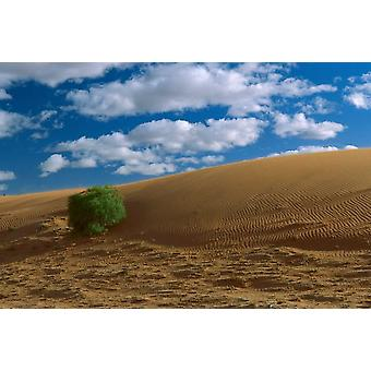 Spinifex Grass auf Sanddüne Strzelecki-Wüste Australien Poster Print von Konrad Wothe