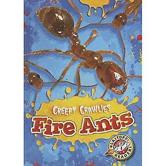 Fire Ants (Blastoff Readers. Level 1)