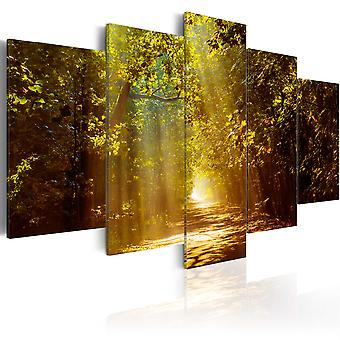 Canvas Print - Forest in the Sunlight