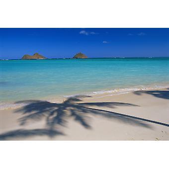 ظلال النخيل هاواي اواهو Lanikai بيتش على المحيط الفيروز الرمل الأبيض بوستيربرينت