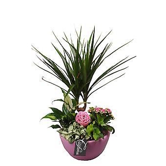 Plants Arrangement in green ceramic pot ↕ 45 cm available with planter |