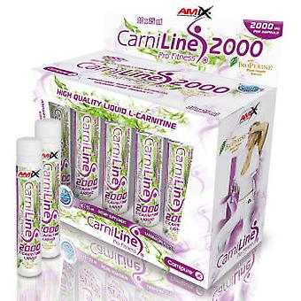 Amix CarniLine Pro Fitness 2000 1 Unit 25 ml (Sport , Anderen)