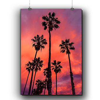 Matte or Glossy Poster with Palm Evening Photo Nature | Wellcoda | *q310