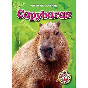 Capybaras (Blastoff! Readers: Animal Safari)