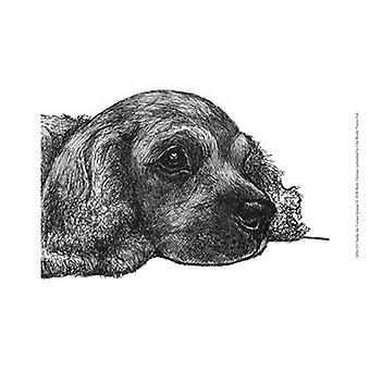 Charlie Cocker Spaniel plakat Print af Beth Thomas (13 x 10)