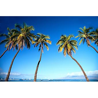 Hawaii Maui Lahaina Coconut Palm Trees Along Ocean Blue Sky C1681 PosterPrint
