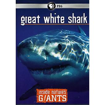 Great White Sharks [DVD] USA import