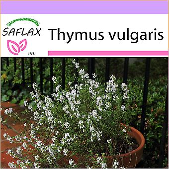 Saflax - 200 seeds - Common Thyme - Thym commun - Timo - Tomillo   - Echter Thymian