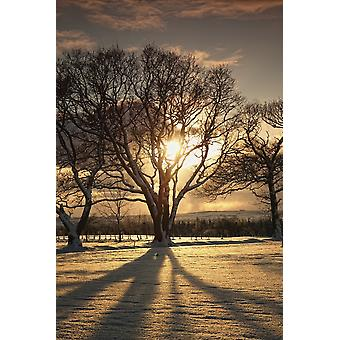 Northumberland England The Sun Setting Through The Trees PosterPrint