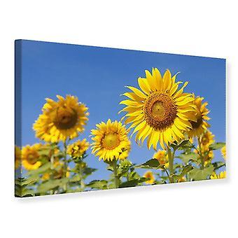 Canvas Print hemelse zonnebloem