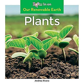 Plants by Andrea Rivera - 9781680799392 Book