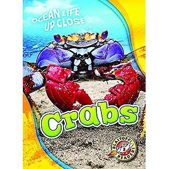 Crabes (vie océanique près)