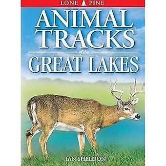 Animal Tracks of the Great Lakes (Animal Tracks Guides)