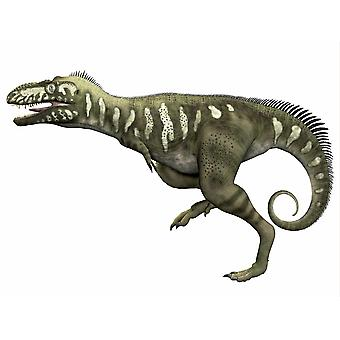 Bistahieversor is a carnivorous dinosaur that lived during the Cretaceous Period of New Mexico Poster Print