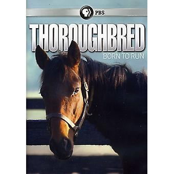 Thoroughbred: Born to Run [DVD] USA import
