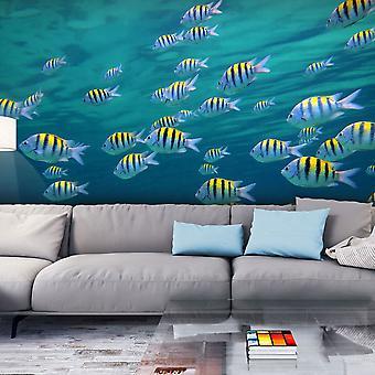 Fondos de escritorio - paisaje submarino - Caribe