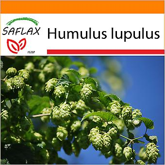 Saflax - Garden in the Bag - 50 seeds - Common Hop - Houblon - Luppolo - Lúpulo - Echter Hopfen