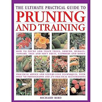 Ultimate Pruning And Training