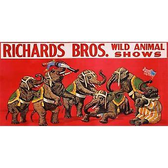 Richards Bros wilden Tier zeigt ca 1925 Poster Print von anonym