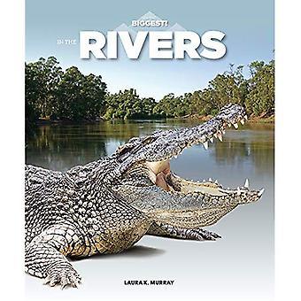 Dans les rivières (je suis le plus grand)