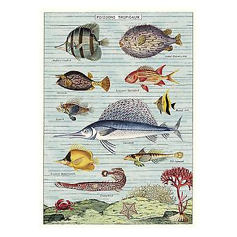 Cavallini Poisson Tropicaux Fisch Wrapping Paper Poster