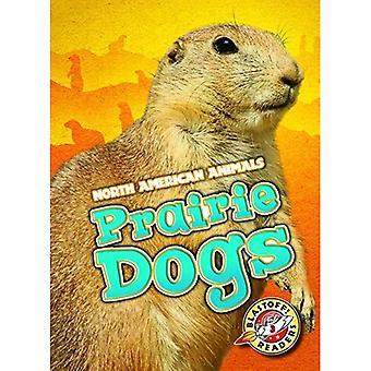 Prairie Dogs (North American Animals)