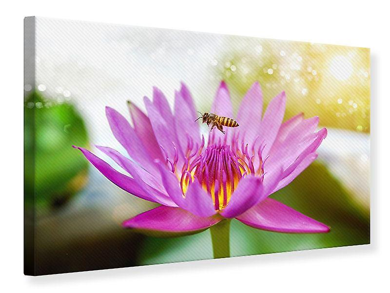 Toile impression Lotus avec abeille