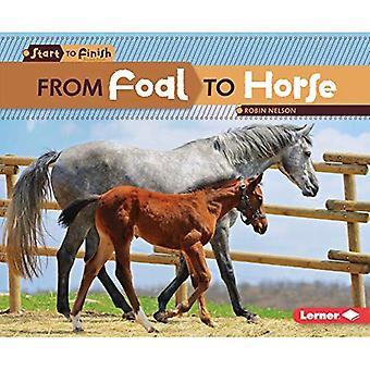 Från föl till häst