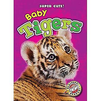 Baby Tigers (Super Cute!)