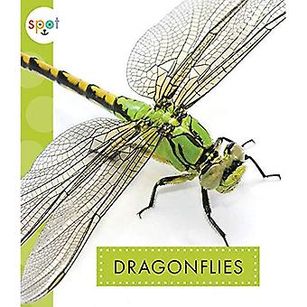 Dragonflies (Spot Creepy Crawlies)