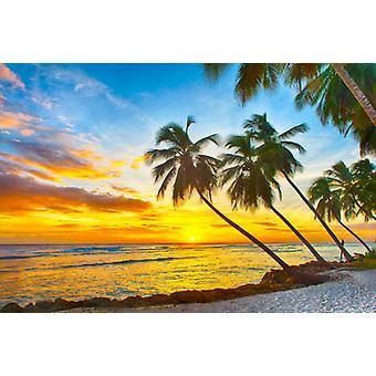Tapet Mural Barbados solnedgang