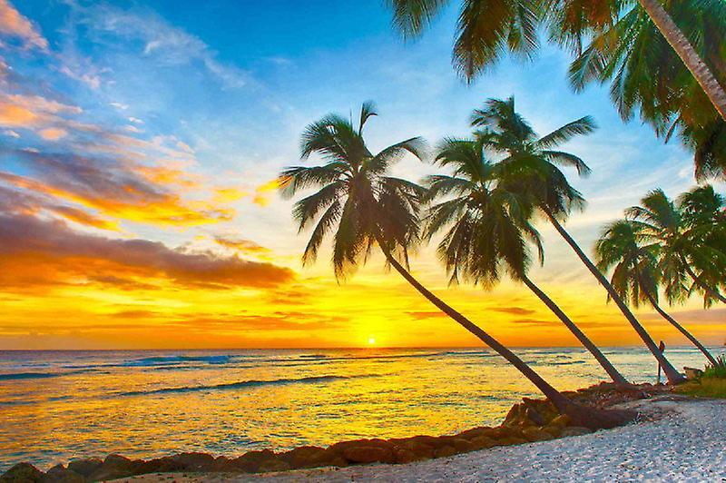 Papier peint mural Barbados Sunset