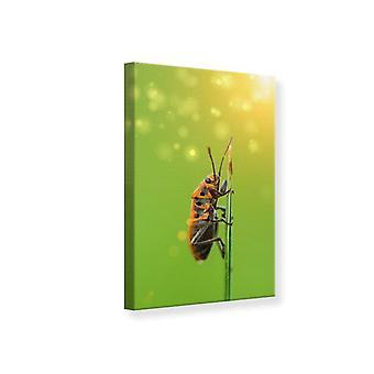 Leinwand drucken das Insekt
