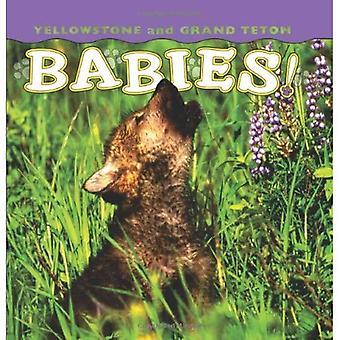 Yellowstone et Grand Teton bébés!