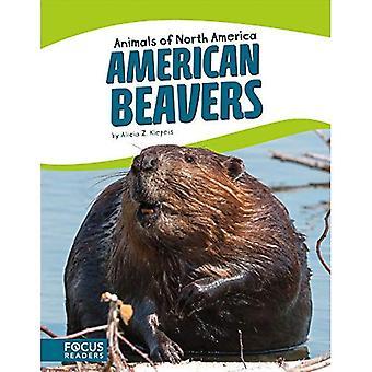 Amerikansk bäver (djur i Nordamerika)
