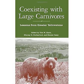 Samexisterar med stora rovdjur: lärdomar från större Yellowstone