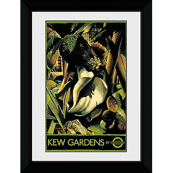 Transport For London Kew Gardens 2 indrammet Collector Print
