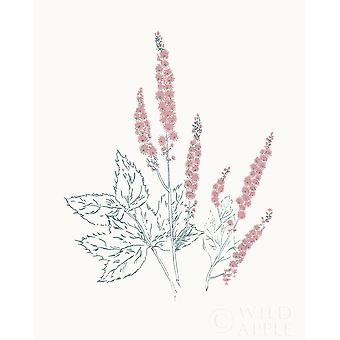 Flowers On White Vii Contemporary Bright Poster Print by Wild Apple Portfolio