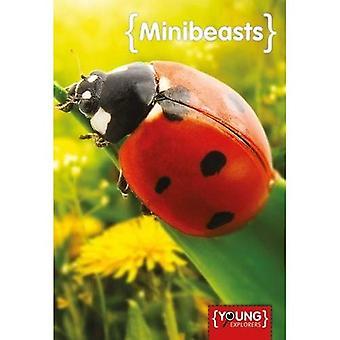 Mini-Beasts (Young Explorers)