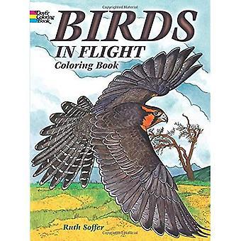 Uccelli in volo, libro da colorare