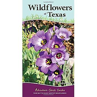 Wildflowers of Texas (Adventure Quick Guides)