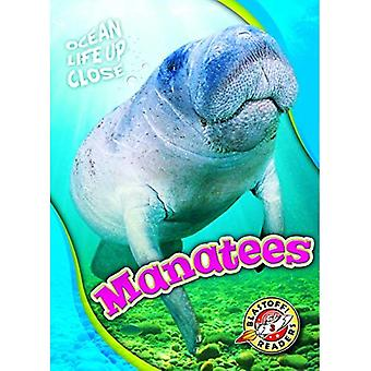 Manatees (Ocean Life Up Close)