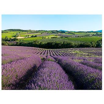 Artgeist Wallpaper Lavendelfelder (Dekoration , Fototapeten , Fototapeten Standard)