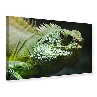 Canvas Print XXL Iguana
