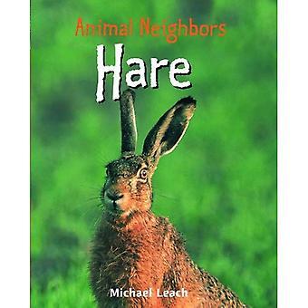 Haas (dierlijke buren)